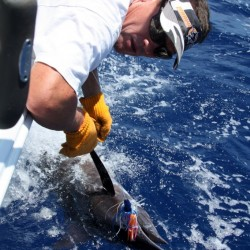 Chuck with a marlin