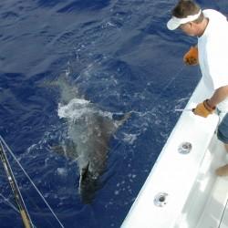 captain jim with hammer head shark